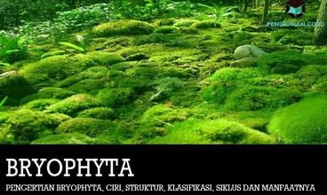 pengertian-bryophyta